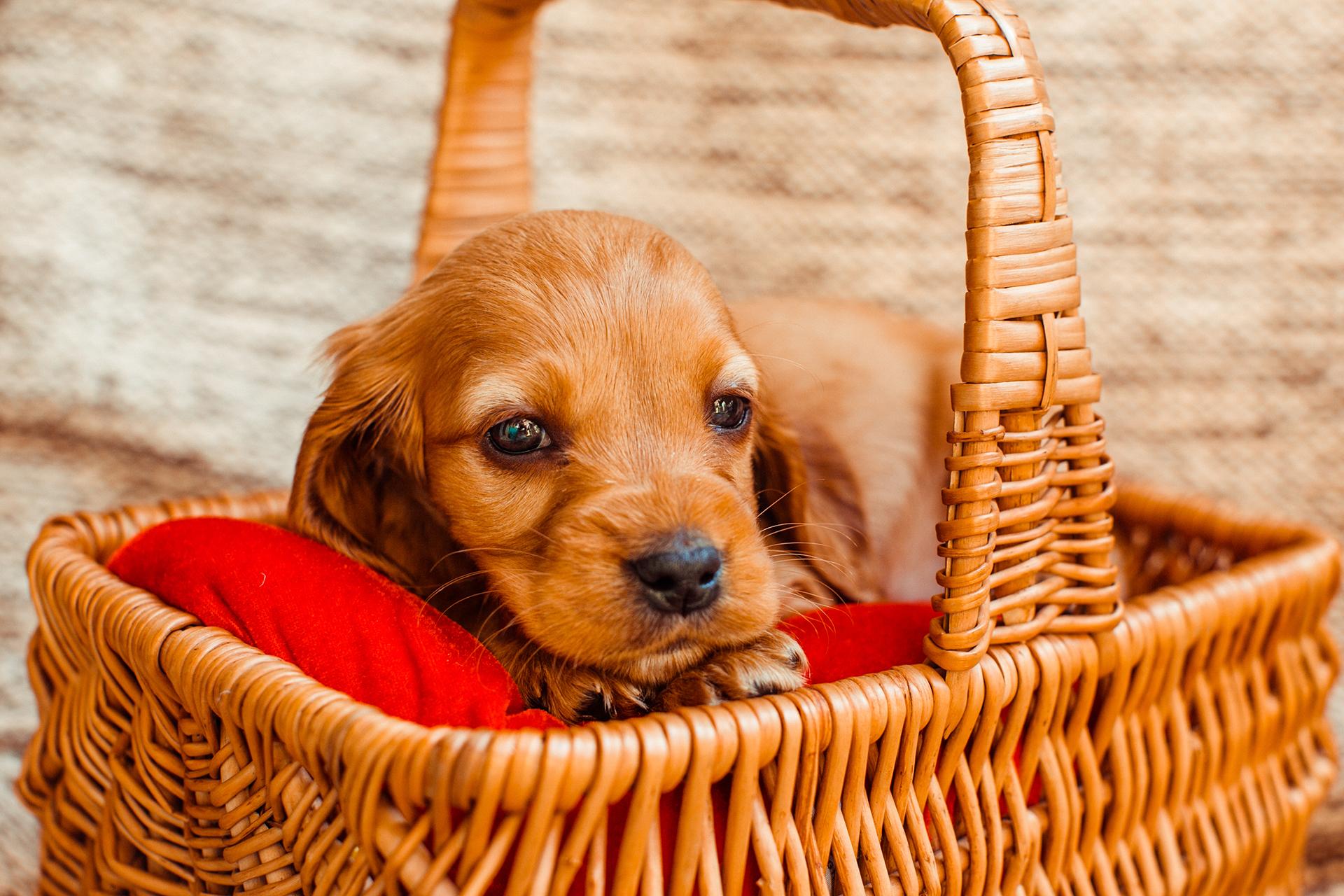 Domande Al Veterinario Cane contributi sterilizzazione cani padronali   comune di assemini